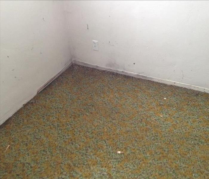 Mold Remediation What is black mold?