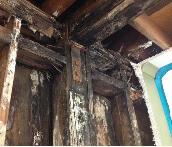 Mold Remediation Mold removal in the Fort Bragg area
